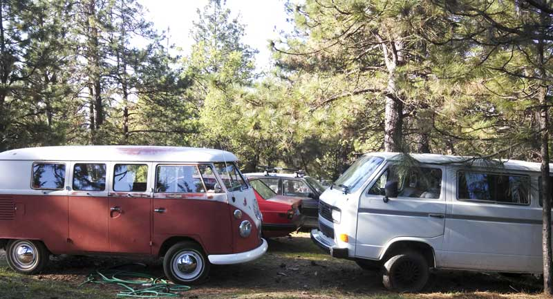 in the woods saying hello to a younger VW relative