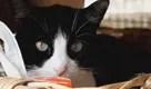 Appello a Milano: adotta un gatto!