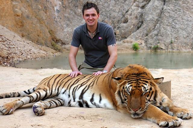 Infelizmente um dos tours muito famoso na Ásia, tirar fotos com tigres dopados