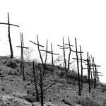 El Alma de los Bosques Desaparece Entre Llamas