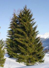 Spruce's Gluten-Free Vegetarian and Vegan Thanksgiving