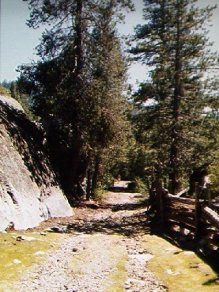 Original road through the forest Photo by C.N. Plummer