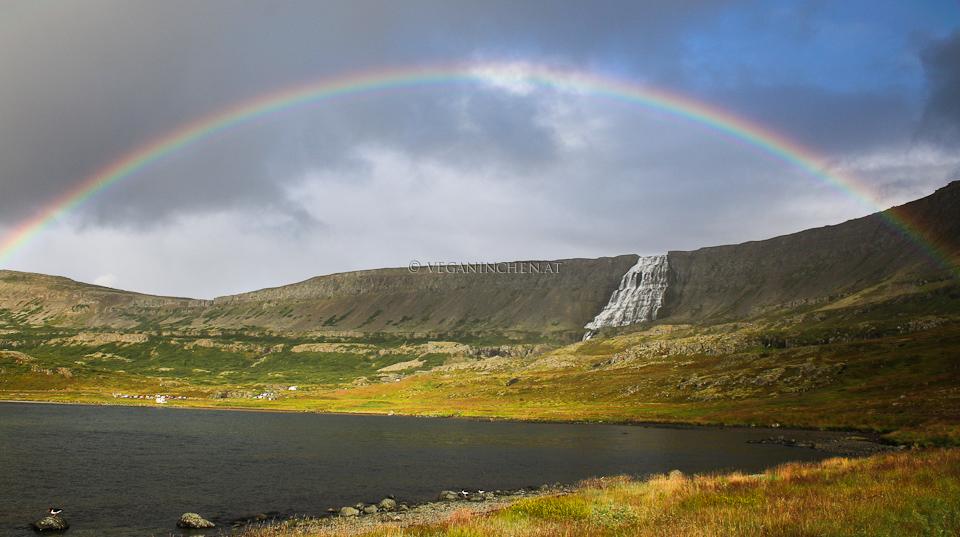 Regenbogen Dynjandi Westfjorde Island veganinchen