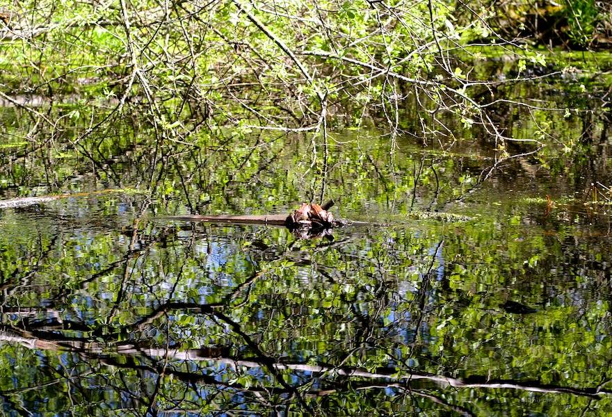 Tirol Amphibien