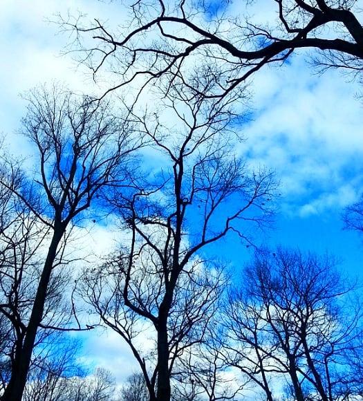 Sky in Caumsett Park