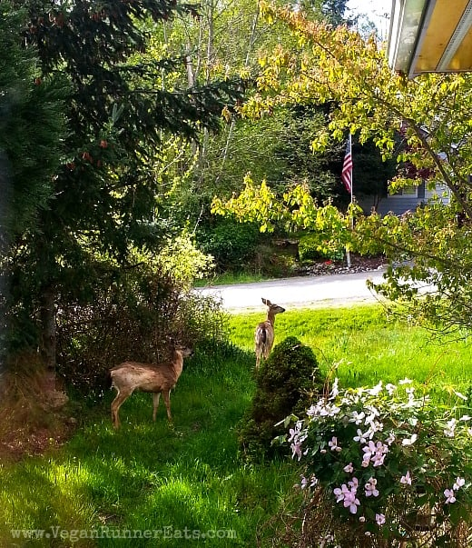 Deer on Whidbey Island
