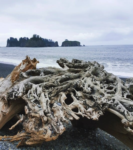 Driftwood on Rialto Beach in La Push, WA