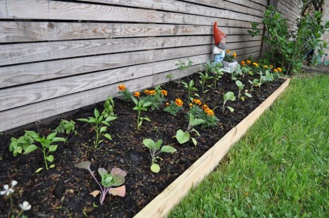 My Garden's Progress