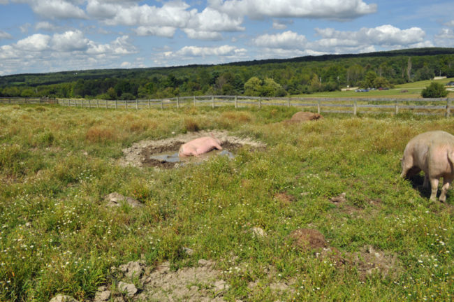 Farm Sanctuary / Watkins Glen Vegan Ops
