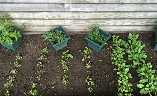 It's All Green / Garden Log, Spring 2016: Day 35: Seven