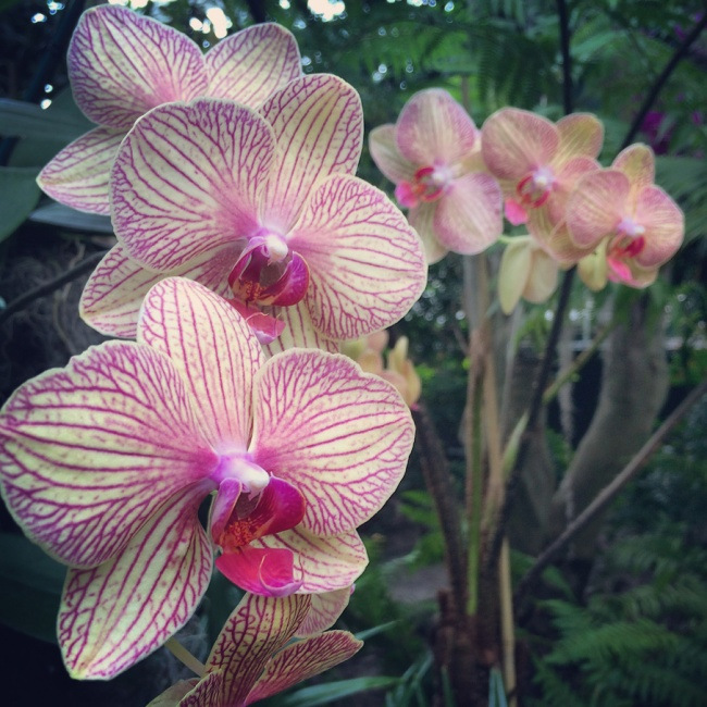 These Are a Few of My Favorite Things: <b>Orchids</b>