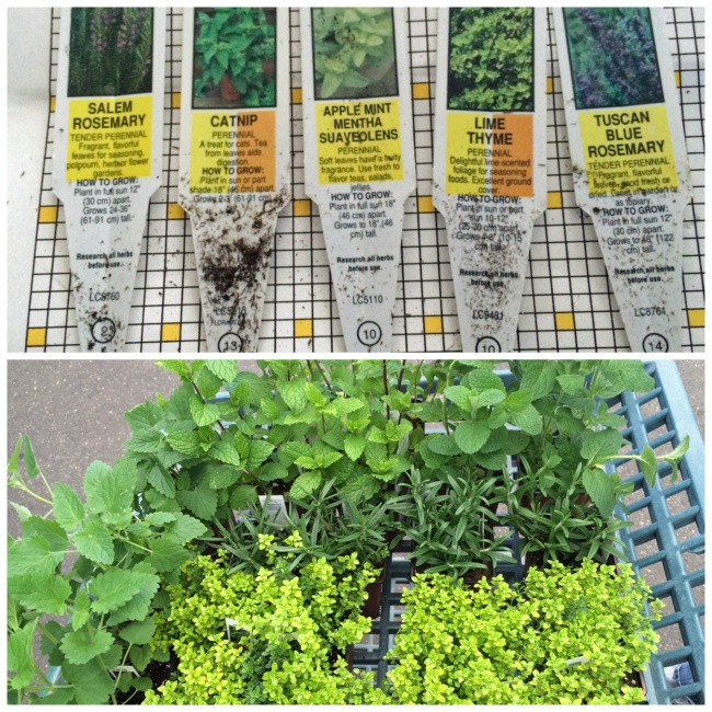 Garden Log, Spring 2016: Day 1: Garden Startin'