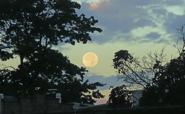 Autumn Delights: Harvest Moon and A Late Litter of Butterflies