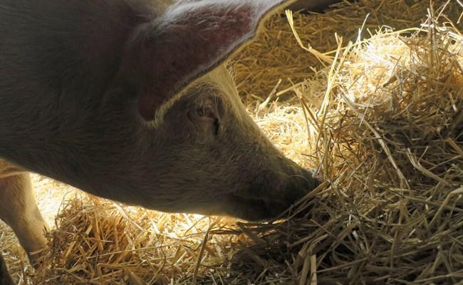 Birthday in Ulster County/Woodstock Farm Sanctuary