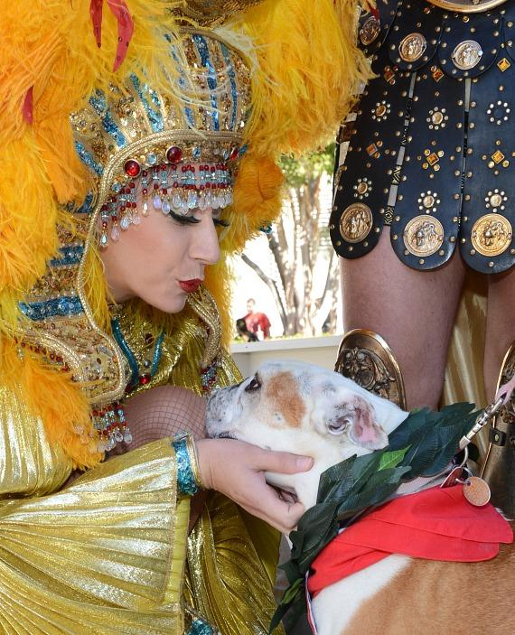 """Cleopatra crowns Lola as winner of the inaugural """"Running of the Bulldogs"""" at Caesars Palace in Las Vegas"""