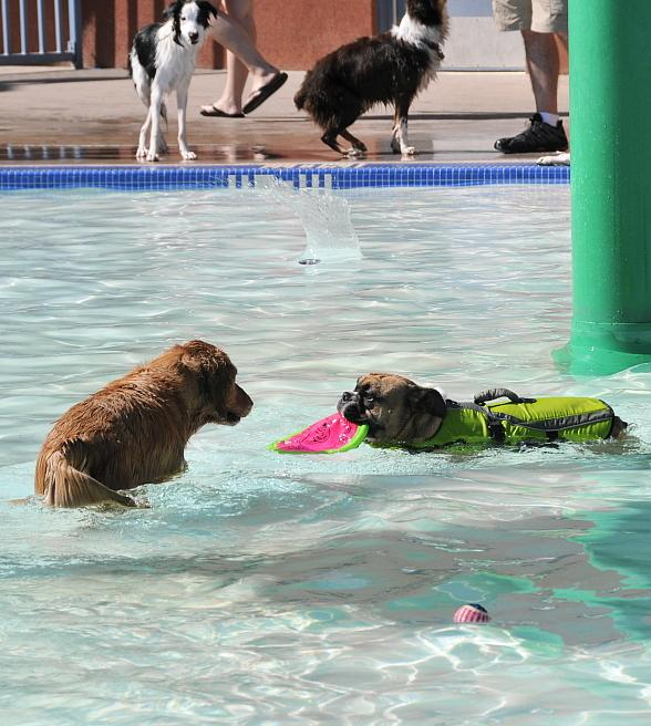 Doggie Paddle & Play Day Coming to Black Mountain Aquatic Complex