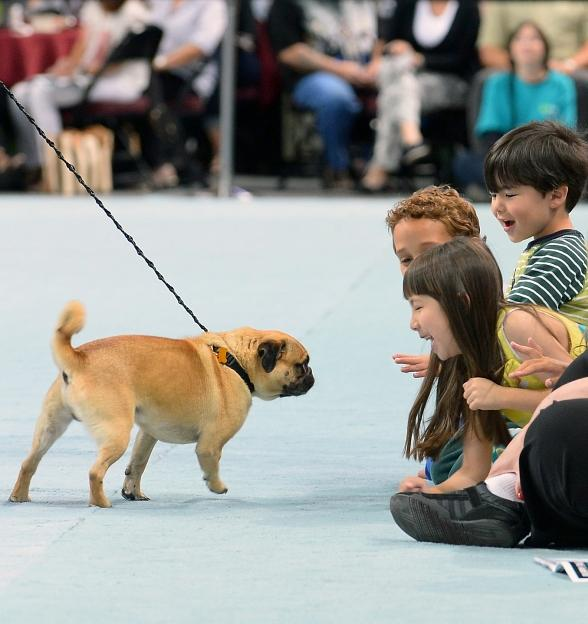 Contestant Bogo greets excited spectators during The Animal Foundation's 11th annual Best In Show