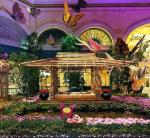 Bellagio's Conservatory & Botanical Gardens – South Bed