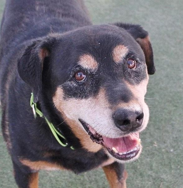 The Animal Foundation Waives Adoption Fees for All Dogs Six Months and Older, June 9-11