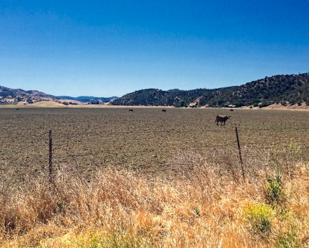 A cow and I bonded when I was a gazillion miles from the middle of nowhere. This was about an hour from Calera.
