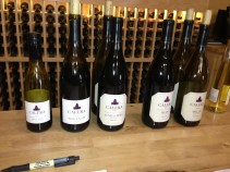 This was the lineup of wines that I tasted.