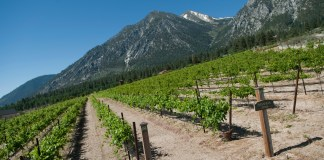 Tahoe Ridge Winery Vineyard