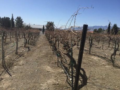 So Nevada Wine Excursion24