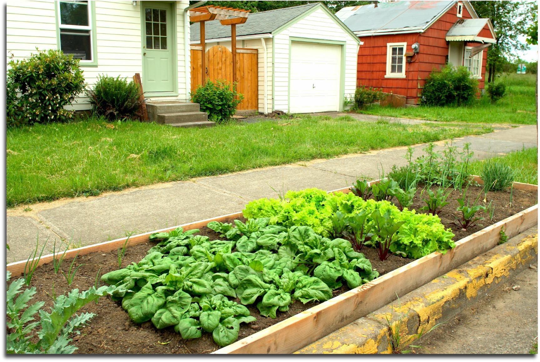 Planning A Vegetable Garden Layout For Beginner Gardeners