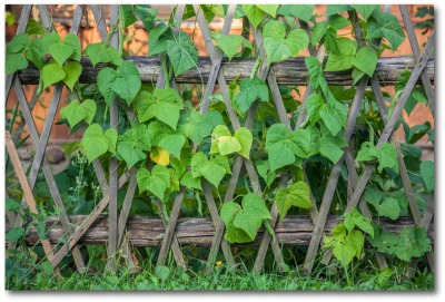 Vegetable Garden Fencing Ideas
