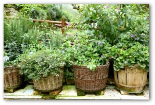 Container Garden Design Plans Amazing House Plans
