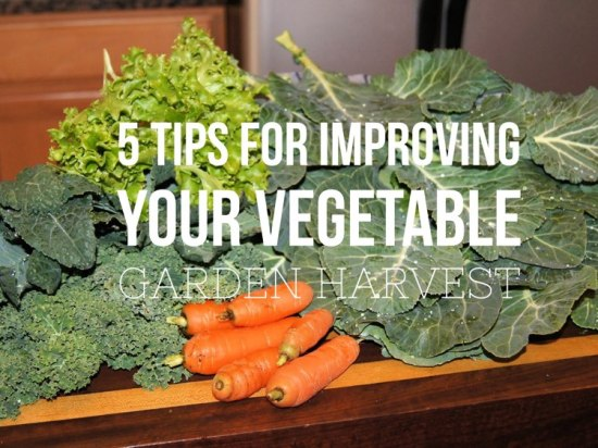 5 tips for a better vegetable garden