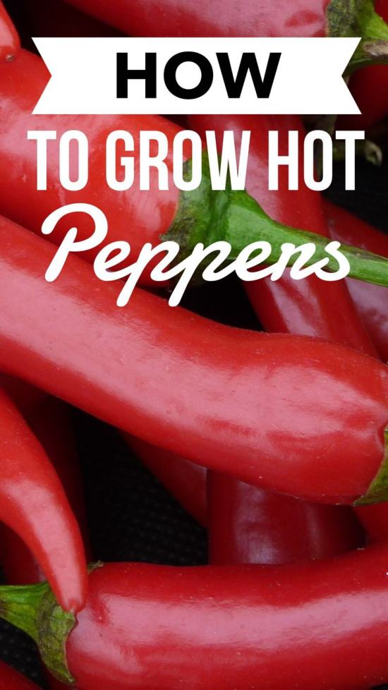 Learn how to grow hot peppers and have a successful garden