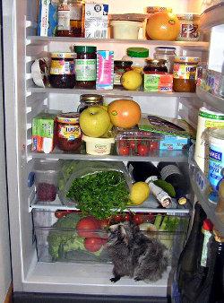 frigo vegan