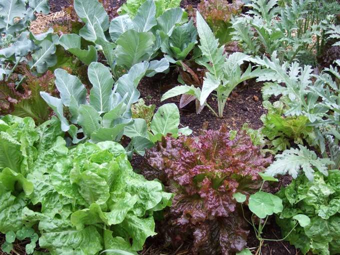 Garden Vegetable Earthbox