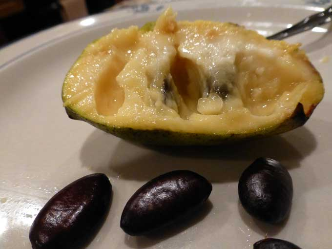 Pawpaw Flesh and Seeds Foraging for Wild Pawpaw Fruits in Pennsylvania
