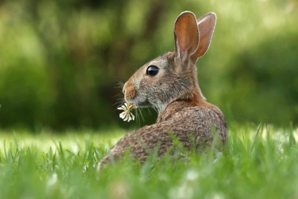 leaping bunny cruelty free vegan