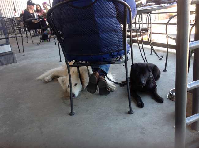 Phoenix and Coal patiently allowing us to eat in peace in Luna's pet-friendly outdoor seating.