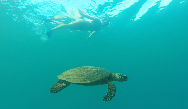 Swimming with a green turtle in the wild, such a beautiful experience
