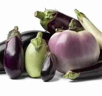 eggplant recipes