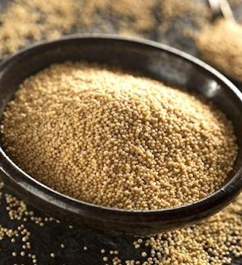 Grain amaranth
