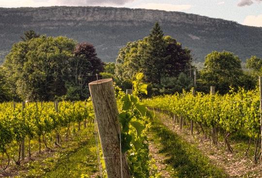 Whitecliff winery