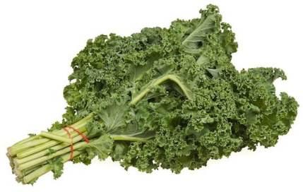 Kale — fresh bunch curly