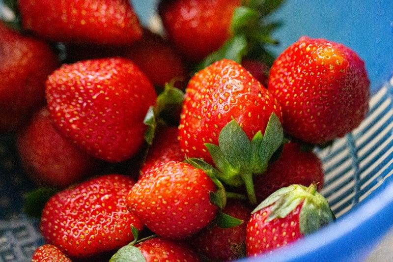 strawberries in a dark blue colander