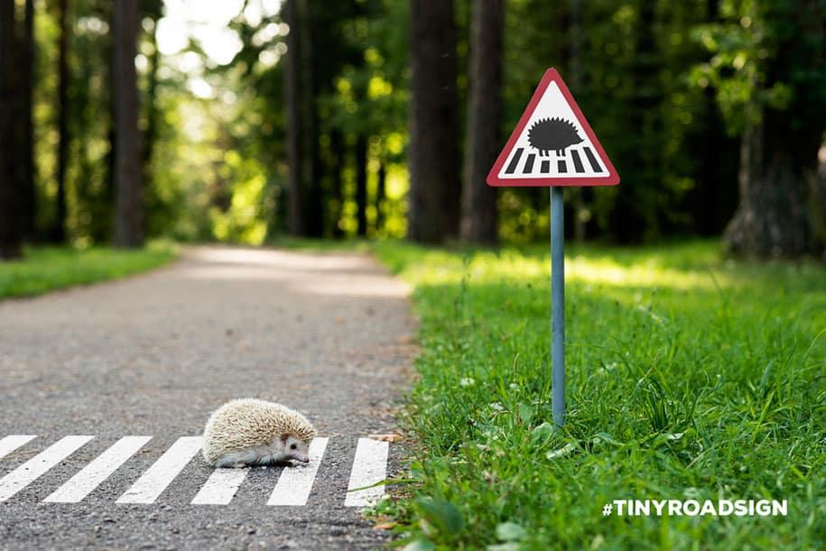 قنفذ يحاول عبور الشارع