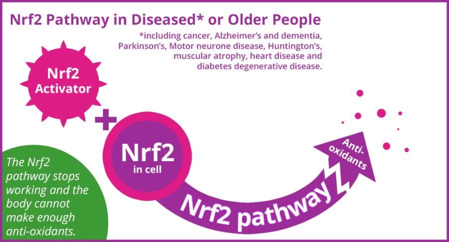 Nrf2 pathway for diseased or older people