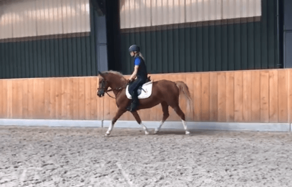 050 Allround Kinderpony