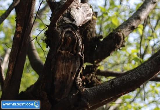 sv-petka-na drvo