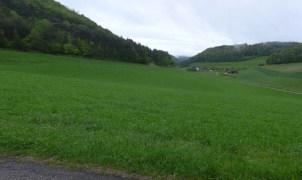 140509_aargauer_runde_02
