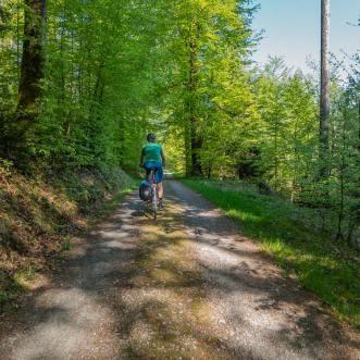 Durch den Frühlingswald kurz vor Schloss Liebegg. | © 2018 Dominik Thali