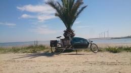 Gazelle Cabby or Doggy på Palmestranden 9900 (1)